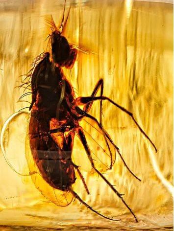 Тонкое нежное кольцо из золота и янтаря с инклюзами насекомых«Клио» 17, Размер кольца: 17, фото , изображение 4