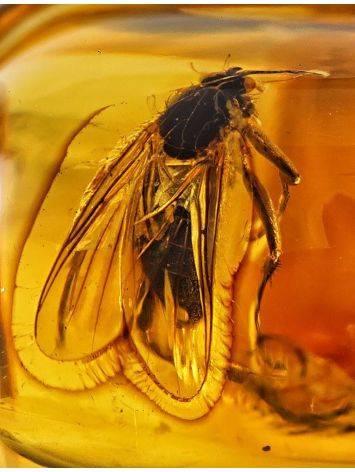 Кольцо из золота с натуральным балтийским янтарём с инклюзом «Клио» 17, Размер кольца: 17, фото , изображение 3