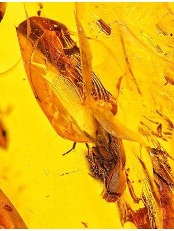 Крупный объёмный кусочек натурального балтийского янтаря с инклюзами 93х72х26 мм, фото , изображение 4