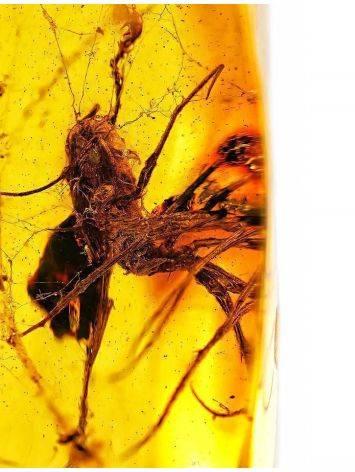 Кусочек натурального балтийского янтаря с растительным инклюзом, фото , изображение 2