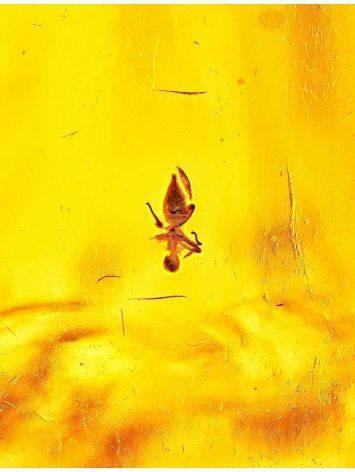 Крупный янтарь коньячного цвета с инклюзами насекомых, фото , изображение 5