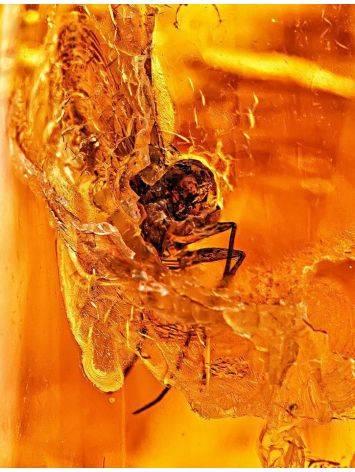 Крупный янтарь коньячного цвета с инклюзами насекомых, фото , изображение 2