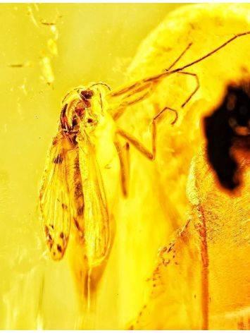 Натуральный балийский янтарь с инклюзом, фото , изображение 2