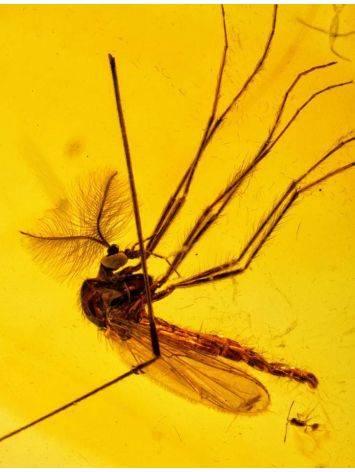 Удлинённая подвеска из натурального янтаря с инклюзом комарика, фото , изображение 3