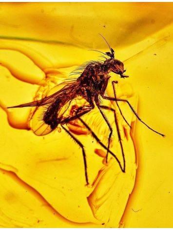 Подвеска из полупрозрачного золотистого янтаря с включением мухи, фото , изображение 2