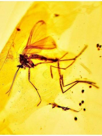 Сияющий кулон из натурального балтийского янтаря с включениями комариков«Клио», фото , изображение 3